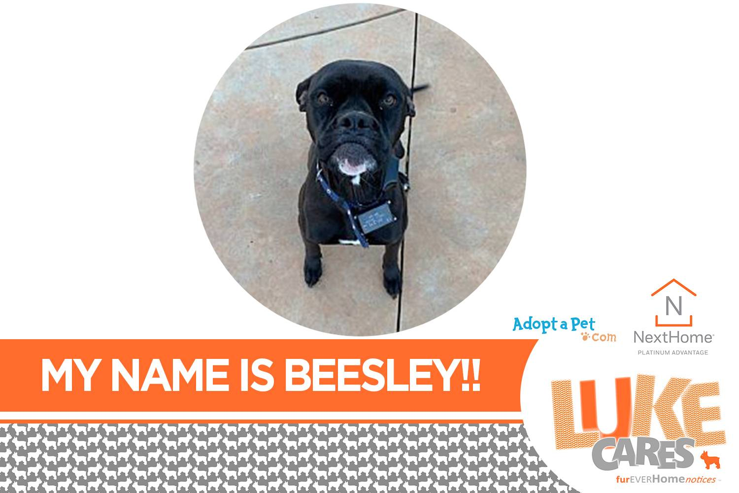 My Name is Beesley.  pet rescue, animal rescue, pets for adoption, dogs for adoption, pet rescue near me, animal rescue near me, pets for adoption near me, dogs for adoption near me, pet rescue rock hill sc, animal rescue rock hill sc, pets for adoption rock hill sc, dogs for adoption rock hill sc, pet rescue charlotte nc, animal rescue charlotte nc, pets for adoption charlotte nc, dogs for adoption charlotte nc, pet rescue fort mill sc, animal rescue fort mill sc, pets for adoption fort mill sc, dogs for adoption fort mill sc, pet rescue in north Carolina, pet rescue in South Carolina, pets for adoption in North Carolina, pets for adoption in South Carolina, dogs for adoption in North Carolina, dogs for adoption in South Carolina, cats for adoption, rescue cats