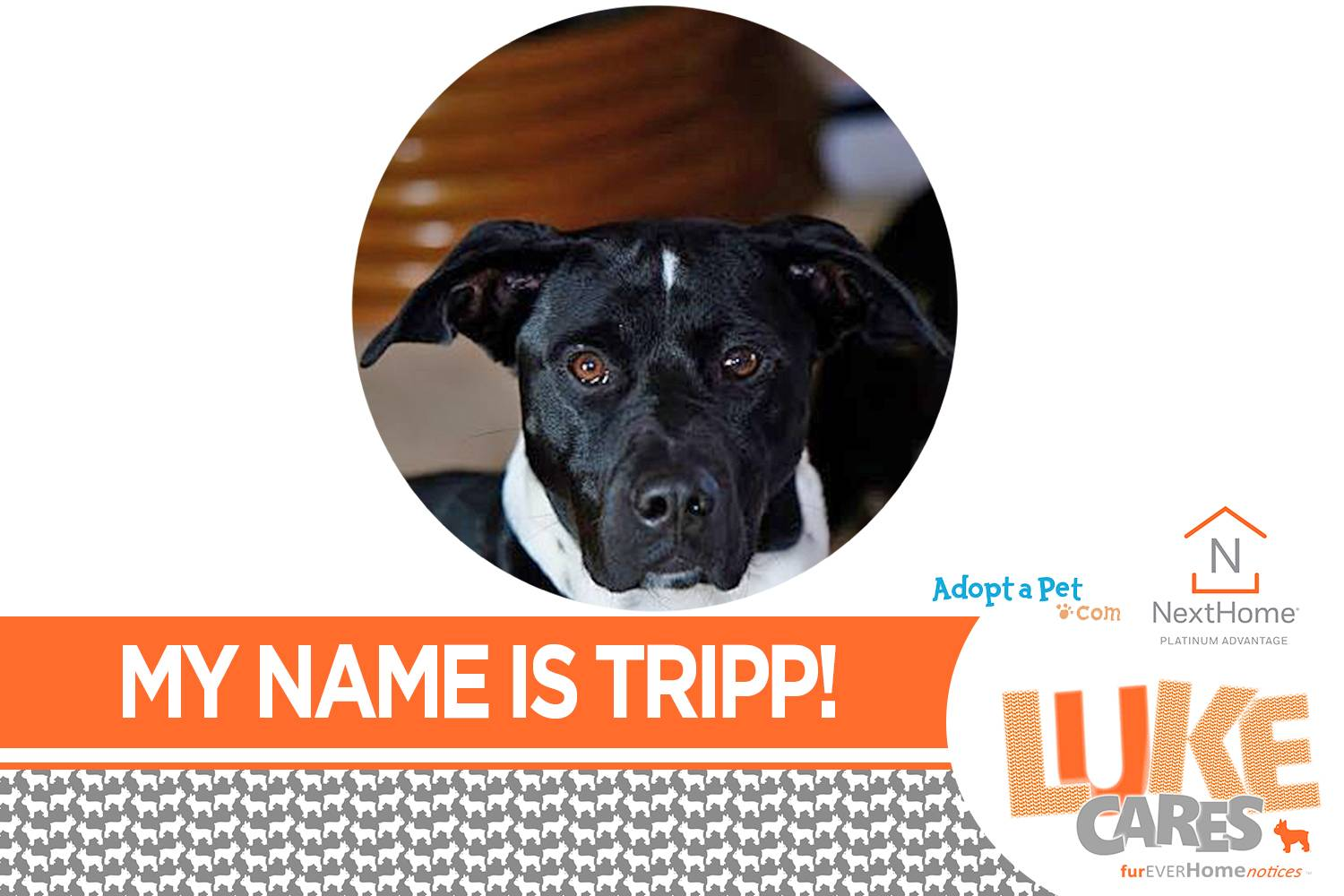 My Name is Tripp