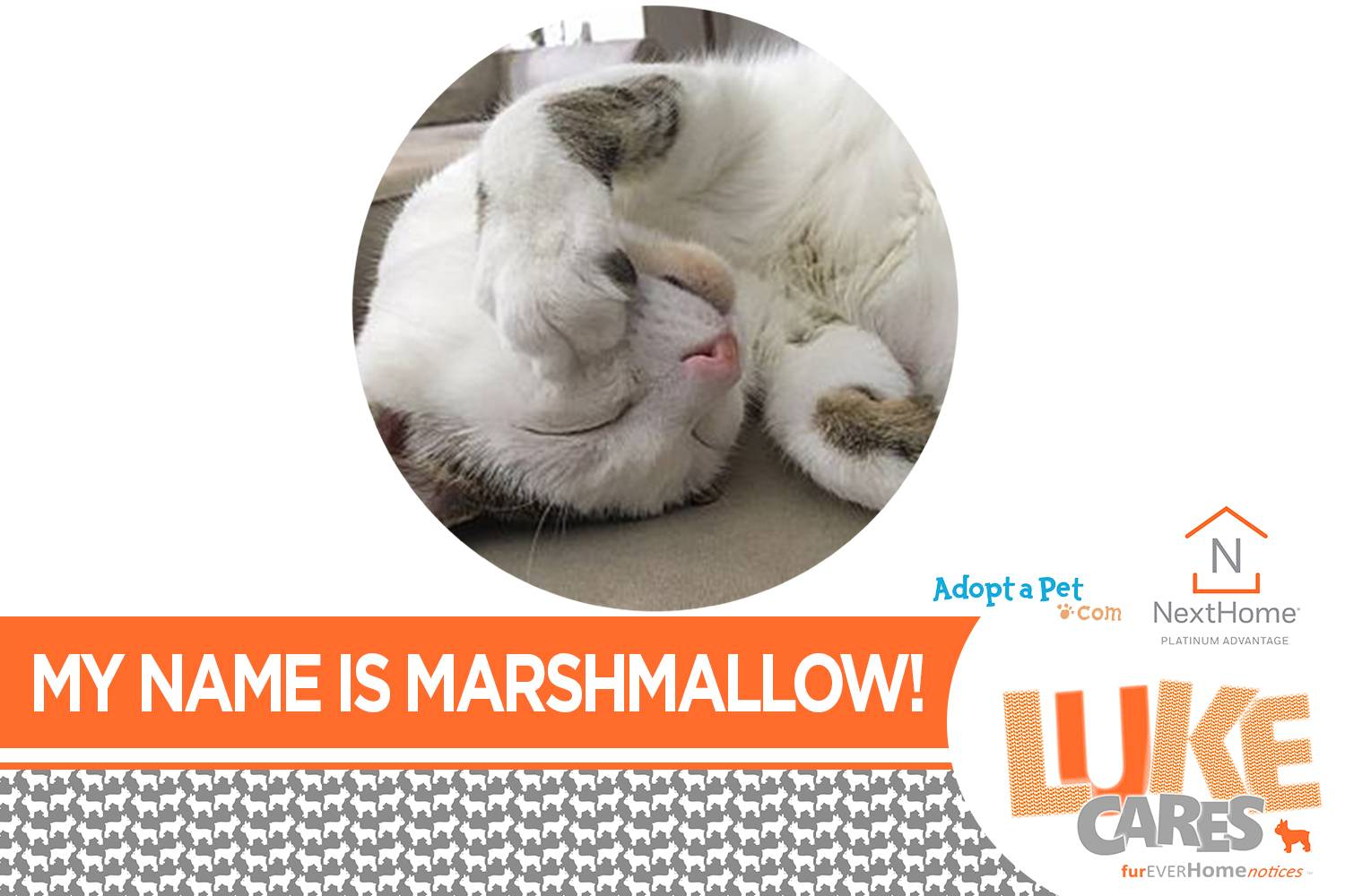 LUKE CARES - furEVERHomeNOTICES  Hi!  My name is Marshmallow! See me here:  http://bit.ly/2J9f5MW  Discover Luke's other friends in need of a furEVER home in the Carolinas!    #lukecares #fureverhomenotices #fureverhomecharities #platinumadvantagerealty #nexthomeplatinumadvantage #adoptapet