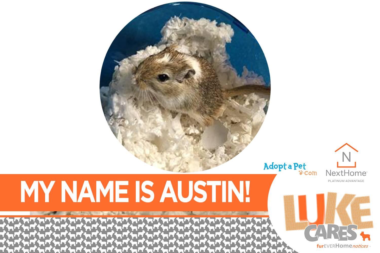 Hi!  My name is AUSTIN!